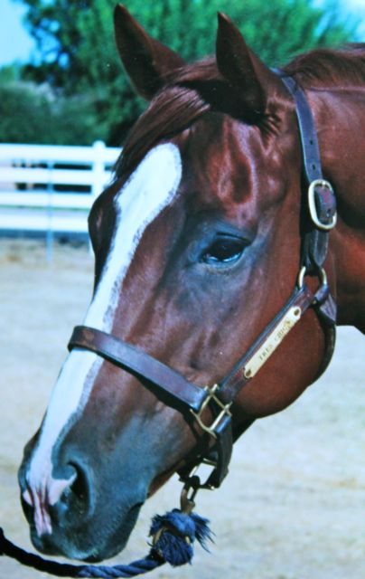 """Razzberry Zam.  An off-track thoroughbred who """"dropped into my lap"""" as a sales project.  One of the most wonderful horses I've ever had the opportunity to ride.  So wonderful, in fact, he sold quickly.  His buyer was the perfect owner and a massage therapist to boot.  Love, compassion and no attachment.  I felt it with this horse and although sad to see him go, it seemed like the gratitude with which we approached each other had a most beneficial outcome for us both."""