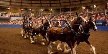 Horse Day in the PNE Agrodome, Vancouver, B.C. (photo: m.pne.ca via Horse Council of B.C.)