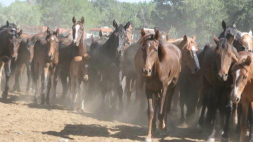 Wild horses (photo: returntofreedom.org)