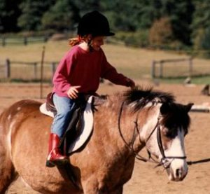York Equestrian