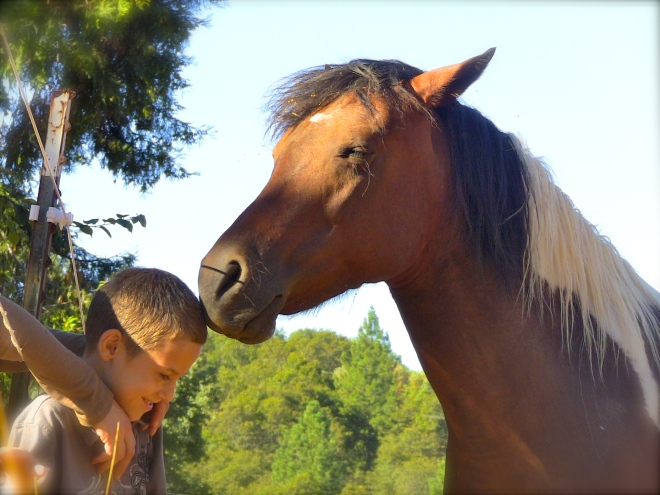 Photo: OurHorses.org http://ourhorses.org/world-peace/horses-expectations-and-changing-the-world/