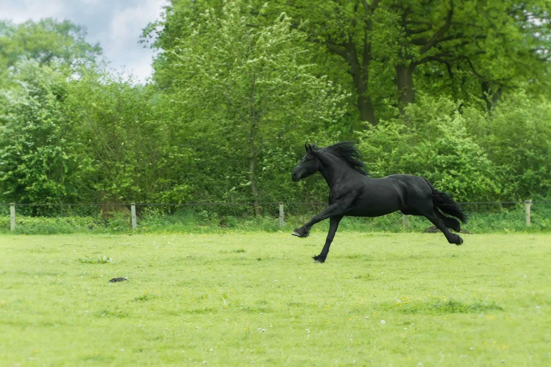 animal black countryside daylight