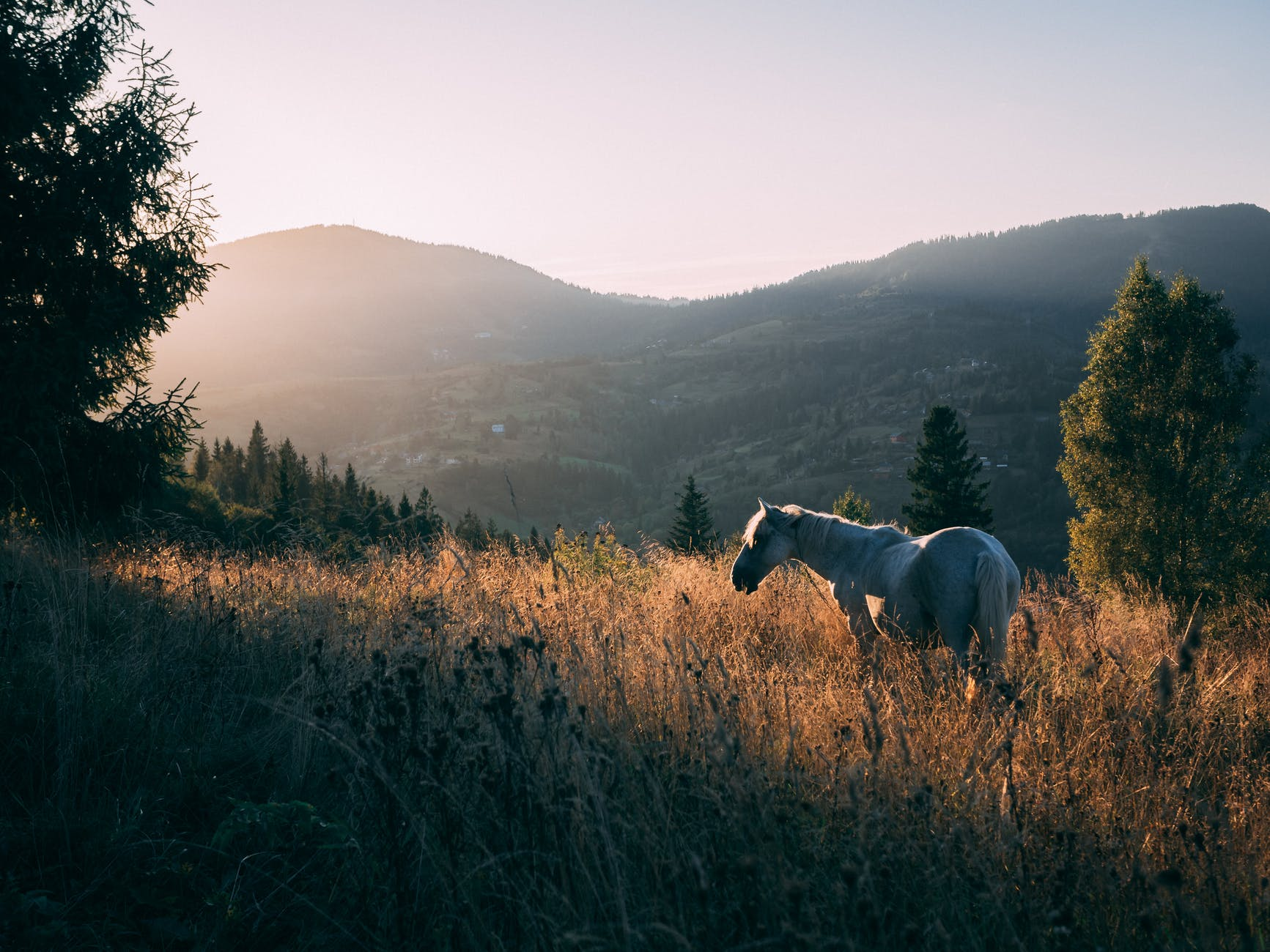 white horse on hilly grasslands